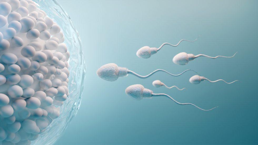 Jak otěhotnět, když se nedaří - rady jak docílit přirozené otěhotnění